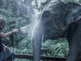 Nicole Moudaber im Artenschutzzentrum für asiatische Elefanten